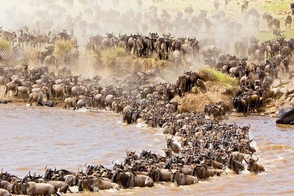 10 Day Wildebeest Migration