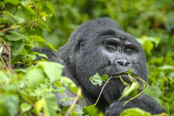 2 Day Rwanda Gorillas