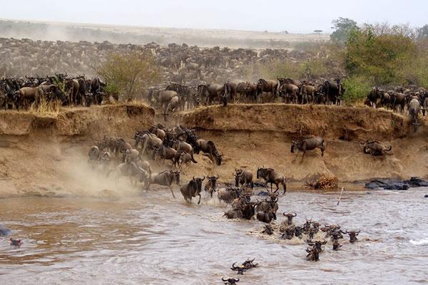 3 Day Maasai Mara Safari