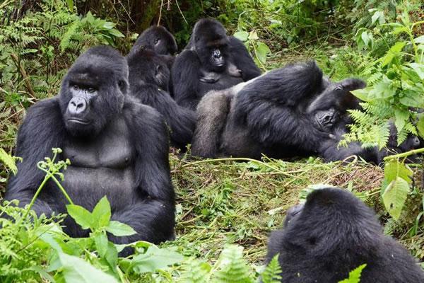 3 Day Mgahinga Gorillas