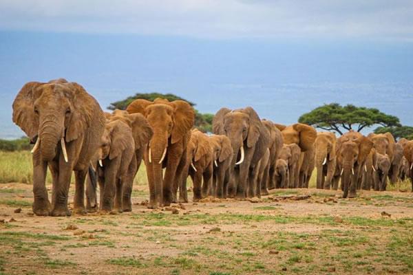 3 Day Tour Amboseli
