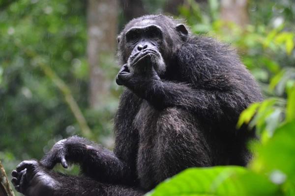 4 Days Gorillas & Nyungwe