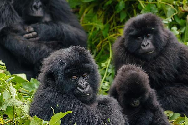 5 Day Gorilla & Akagera