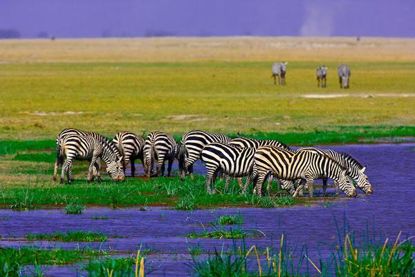 5 Day Maasai Mara & Amboseli