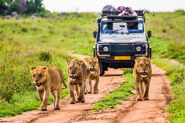 6 Day Adventure Tanzania