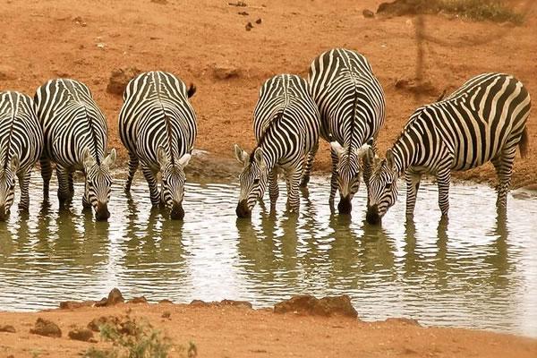 6 Day Amboseli & Tsavo