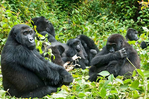 6 Day Great Rwanda Trek
