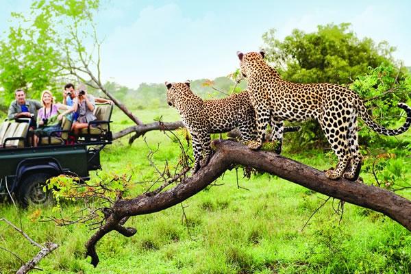 9 Day Kenya Widlife Safari